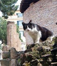 ¡QUE SUERTE TIENEN LOS GATOS EN ROMA!