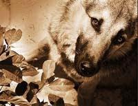 (15/01/011) Un perro salva la vida de varios vecinos en un incendio en Palma y muere intoxicado...