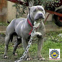 Its my destiny....: TOP TEN FEROCIOUS DOGS IN THE WORLD