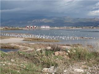 πουλιά στον υγροβιότοπο Βουρκάρι Μεγάρων