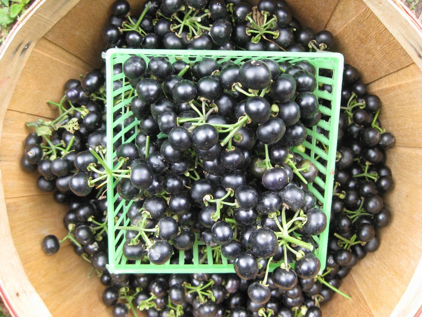 Hey Itu0027s Huckleberries!