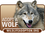 I Love Wolves. I Adopted.  WildlifeAdoption.org