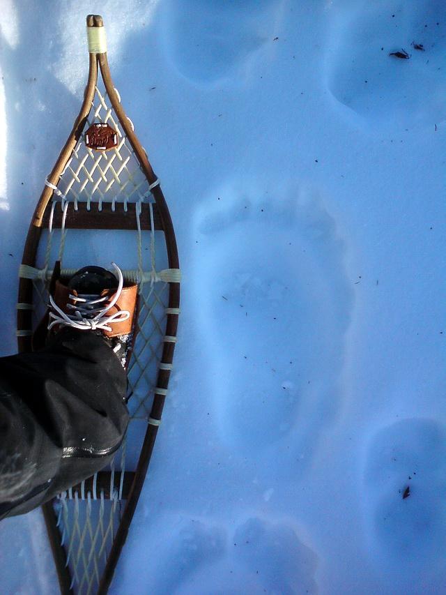 [snowshoeing3.jpg]