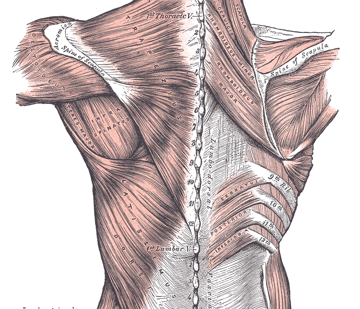 begin to dig: the amazing engineering that is the shoulder, part 1 ...