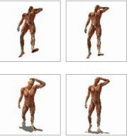 Modelli corpo umano