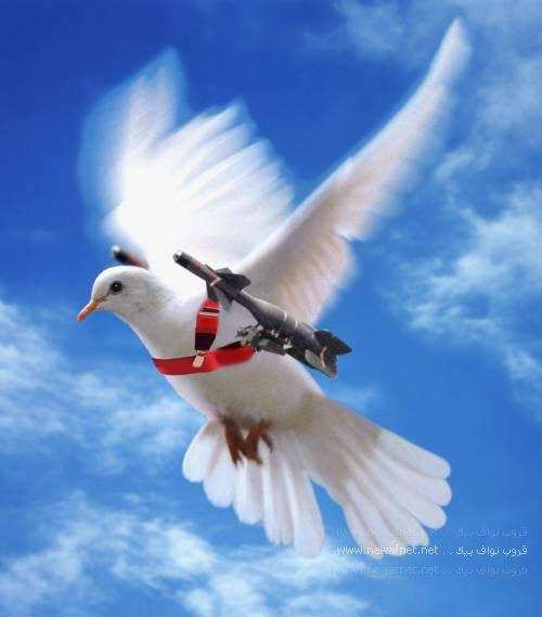 ᐈ Белый голубь рисунок и фото белый голубь скачать