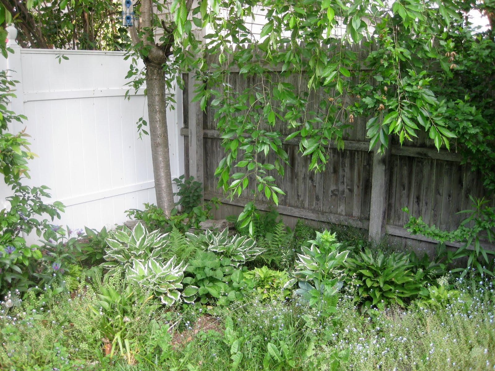 garden by chance