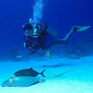Diver photographing marine life