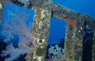 Wreck of the Jolanda, Red Sea