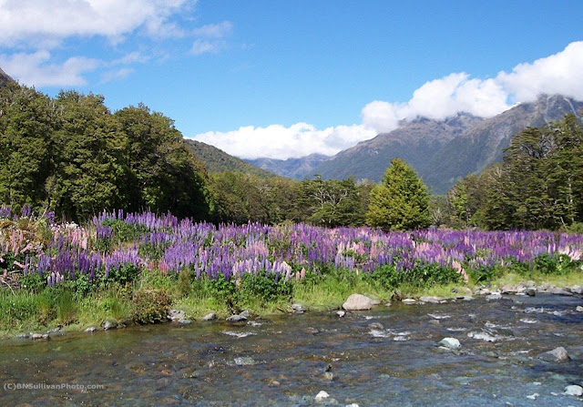 Wildflowers in New Zealand