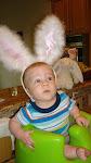 Our Mini Bunny