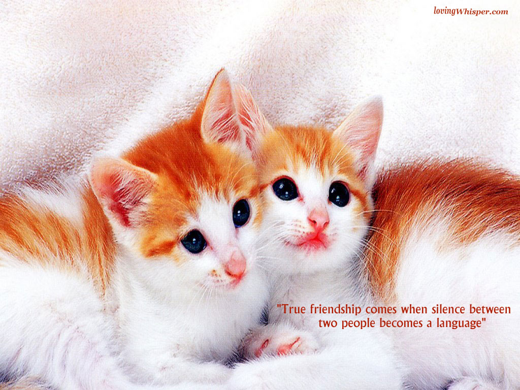 friendship wallpapers 2014