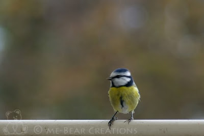 photography, nature, autumn, fall, great tit, tit, titmouse, bird, srl, dsrl, pentax, ist.dl, fotografie, natuur, herfst, najaar, koolmeesje, meesje, vogel