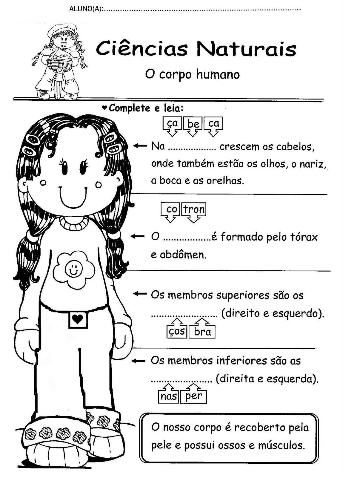 Ciência – O corpo humano