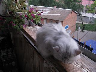 коты и цветы %D0%9C%D0%BE%D1%80%D0%B5+071