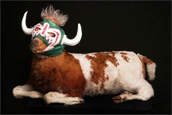 La Vache Qui Rit Plus