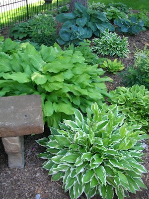 Garden Thyme with the Creative Gardener Hostas in Your