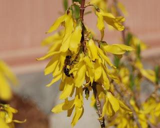 Warm Days Bring Search for Pollen
