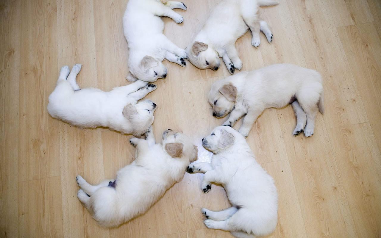 http://3.bp.blogspot.com/_fU7LdRkUMVM/TJTo3plqRbI/AAAAAAAAChs/WsRKg8KPCJo/s1600/cute-puppie