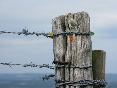 Jelly Babies impaled on barbed wire on South Downs