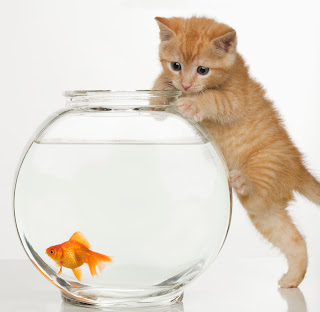 Why Goldfish Bowls Are Not Recommended