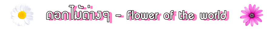 ดอกไม้ต่างๆ - Flower of the world