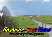 Casanare Puro Llano