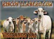 RINCONLLANERO.COM
