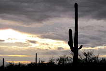 Sonoran Desert, Tucson