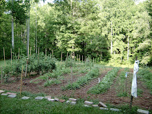 Our Bountiful Vegetable Garden