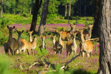 [Изображение: a-group-of-deers.jpg]