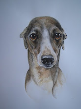 Hondenportret Whippet