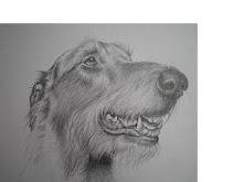 Hondenportret Deerhound