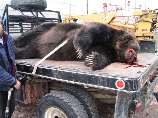 523332419179605318 moreover 252371329980 moreover 12 3 07 Five Killed 4 in addition G Axvljuw2u in addition usedtrucksfinder   image Gd truck Slide. on semi truck moose