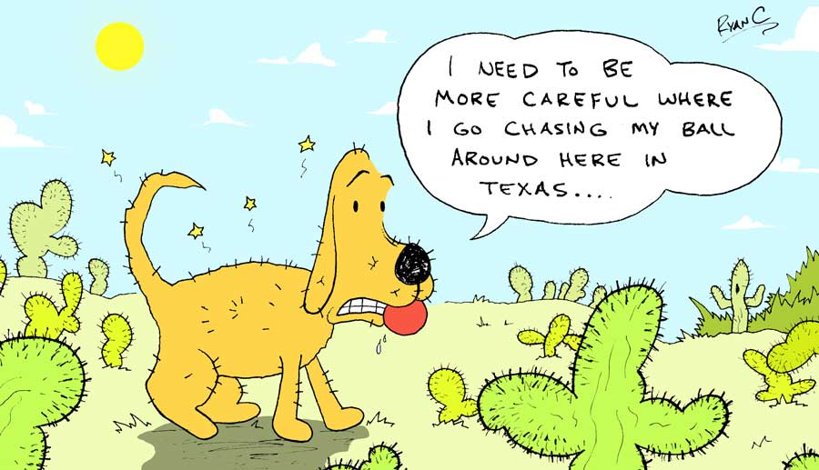 Alien and Dog: Kevin meets cactus...