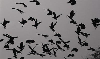 fotografía de fauna, pájaros