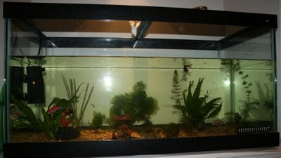 Freshwater aquarium