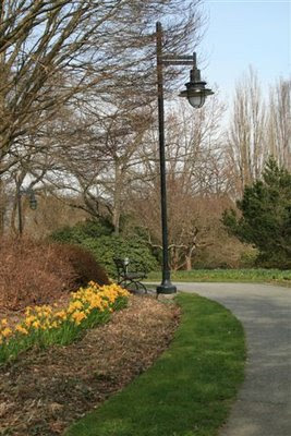 Daffodils and lamp stand