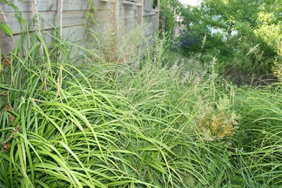 Upper garden in monster grasses