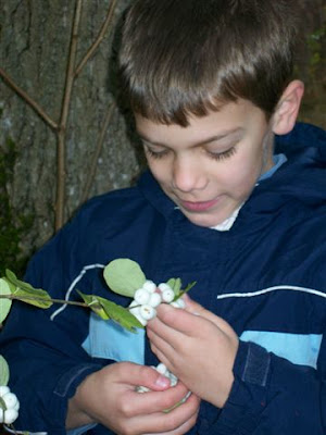 Picking snowberries for popping