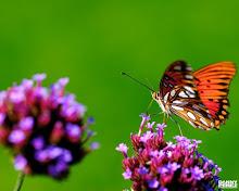 Las Mariposas y sus Secretos