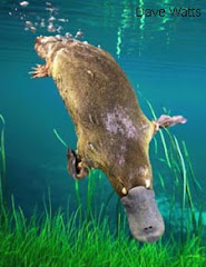 Playful Platypus