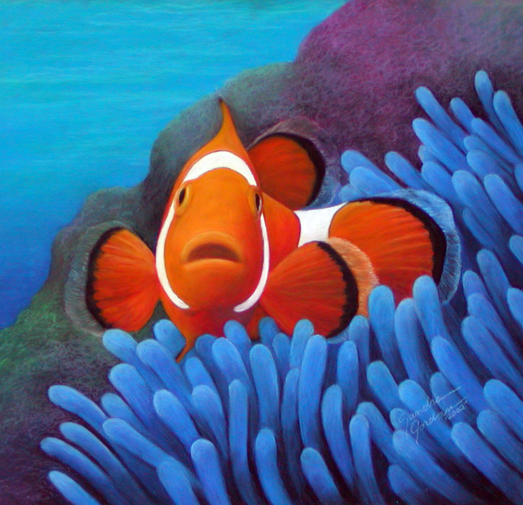 Fish fry ocean acidification and clownfish science for Pictures of clown fish