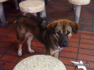 Dog (SE g705)