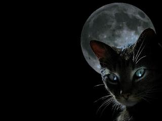 Black Cat (picture)