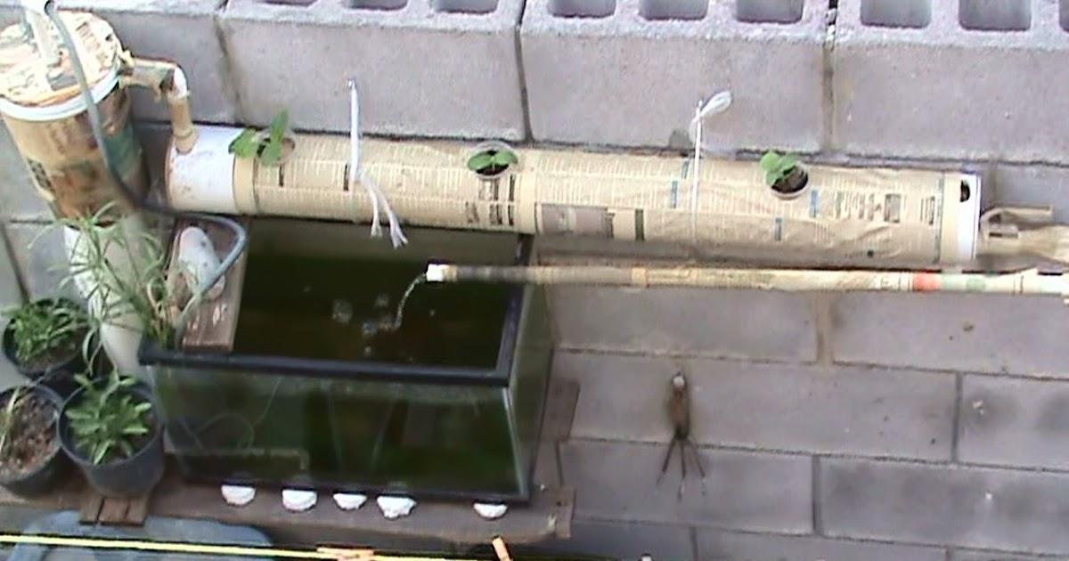 Aquaponic Systems Do It Yourself : Diy aquaponics a small aquaponic system