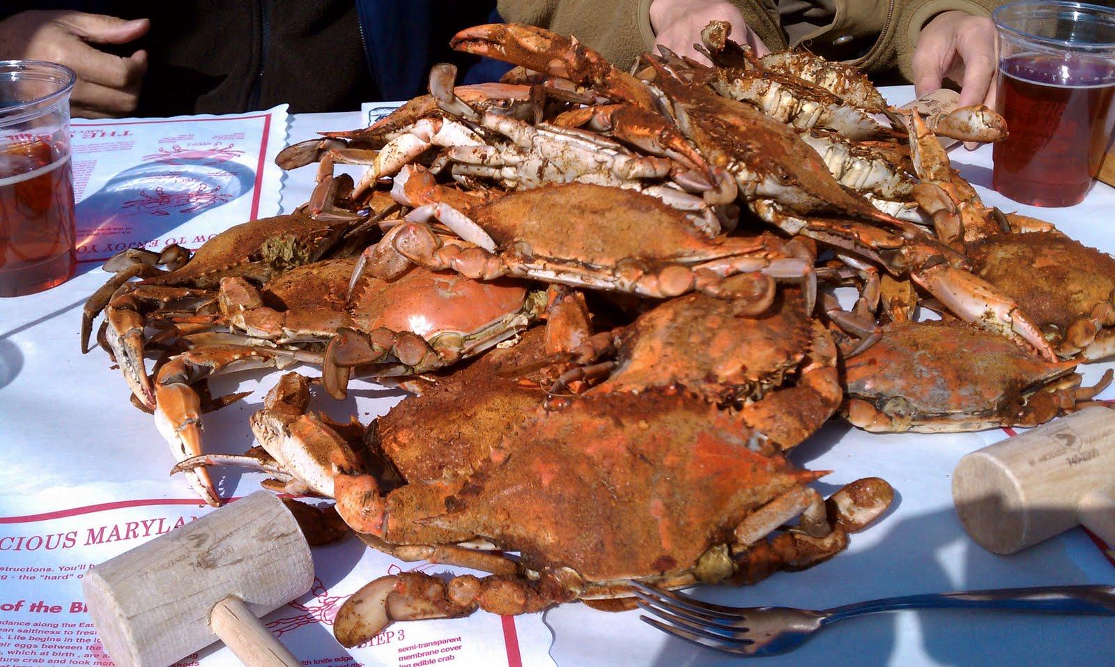 Destination EatsMaryland Blue Crab in Chesapeake Bay