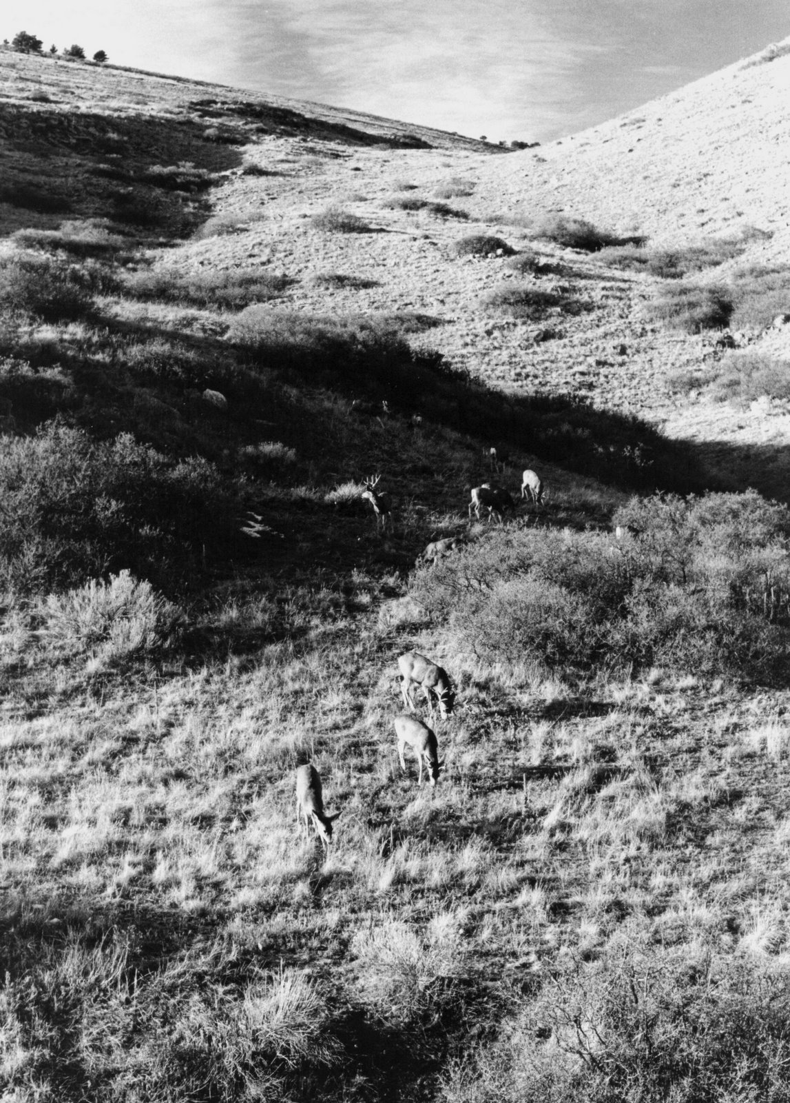 [deer+on+coyote+ridge.jpg]