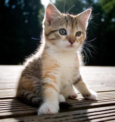 kittens. Cute Kittens Cute Kittens