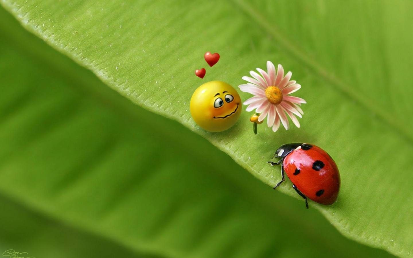 http://3.bp.blogspot.com/_fqhbn8YPG7w/TThJAki3dmI/AAAAAAAAAVY/oLe4I6lRZfQ/s1600/a_cute_yellow_ball_has_fallen_in_love_with_a_ladybug_and_is_giving_her_a_flower_in_this_wallpaper-1440x900.jpg